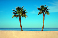 Two palm trees stand alone on the coast of Baha, California , in Mexico. Baha, California Mexico coast.