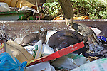 Cats at Hebrew University on Mount Scopus