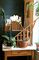 indoor plants and flowers