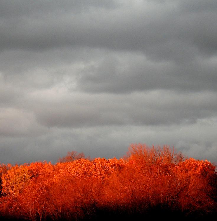 Fall Trees Cloudy Skies