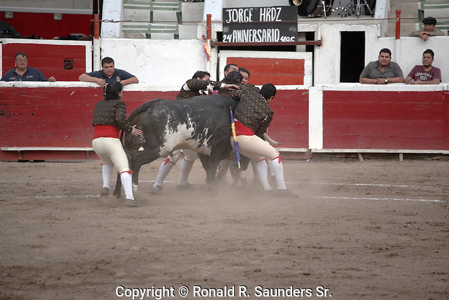 SUPPORT TEAM TACKLES CHARGING BULL