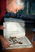 Makande, Gabon. Botanist Frans Breteler working in the Base Camp laboratory with a sample of Agelaea sp.