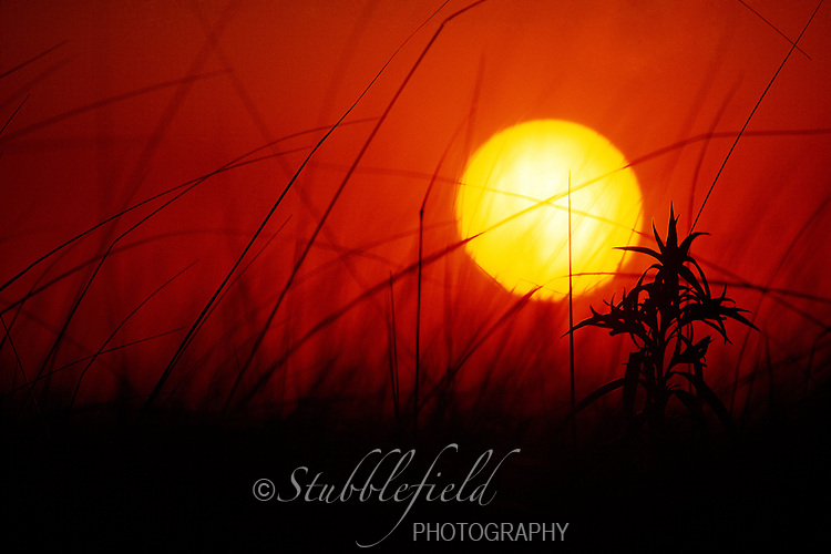 Sunset over dune grass.