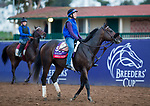 DEL MAR, CA - NOVEMBER 02: American Pastime, owned by Judy Huarte, Mike Mowrey, Gary Woods, Burt Lane & Jane Steeper and trained by Robert B. Hess Jr., exercises in preparation for TwinSpires Breeders' Cup Sprint at Del Mar Thoroughbred Club on November 2, 2017 in Del Mar, California. (Photo by Kazushi Ishida/Eclipse Sportswire/Breeders Cup)