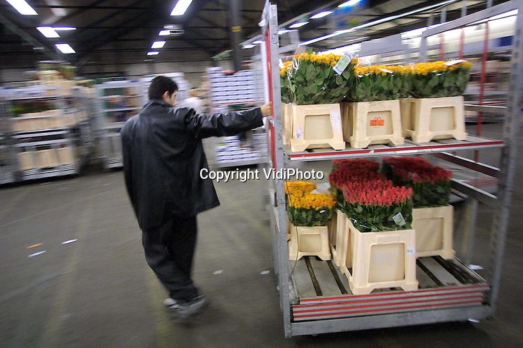 Foto: VidiPhoto..BEMMEL - De stapelwagens van Bloemenveiling Oost Nederland (VON) in Bemmel blijken enorm populair bij dieven. Vorig jaar zijn er 160 stapelwagens, waar bloemen en planten mee worden vervoerd, verdwenen: een schadepost van 96.000 euro. Dat is zes keer zoveel als de jaren er voor. Een deel van de wagens blijkt door klanten achtergehouden te worden. VON gaat nu de controles verscherpen. Om de diefstal van boompjes en struiken tegen te gaan zijn inmiddels als zo'n 45 camera's geplaatst en lopen er viervoetige bewakers rond.