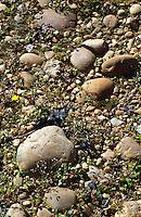 soil detail chateau de campuget rhone france