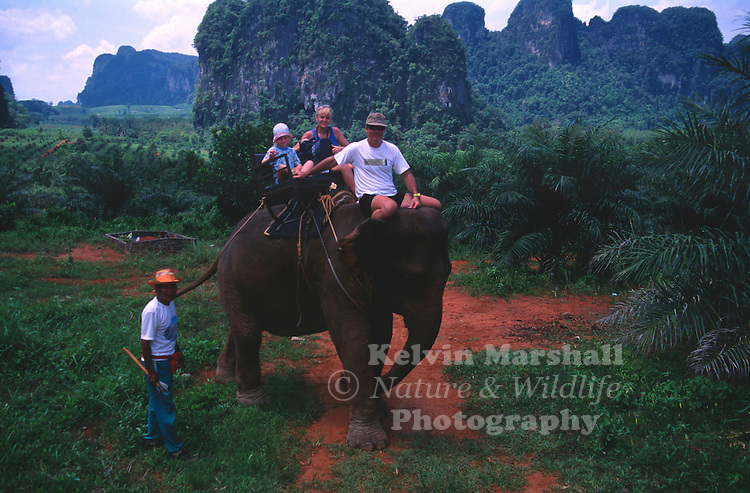 tourists enjoying an Asian Elephant trek through the jungle. Krabi Province, Southern Thailand.