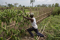 India – West Bengal: A worker mending a fence at Kathalguri Tea Estate, in the Dooars region. Here, 525 workers died of starvation between 2002 and 2005, when the garden was closed. The tea estate permanently reopened in 2013 but its workers are now paid half their daily wages, under a reconstruction scheme approved by management, trade unions and government.
