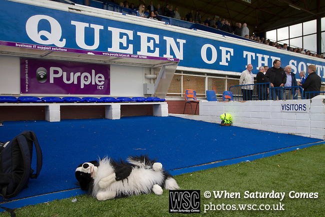 Queen of the South 2 Stranraer 0, 11/08/2015. Scottish Challenge Cup first round, Palmerston Park. The home club's sheepdog mascot lying on the ground by the visitors' dugout at Palmerston Park, Dumfries, before Queen of the South hosted Stranraer in a Scottish Challenge Cup first round match. The game was the opening match of the season in a competition open to sides below the Scottish Premiership. Queen of the South won the match 2-0, watched by a crowd of 1229 spectators. Photo by Colin McPherson.