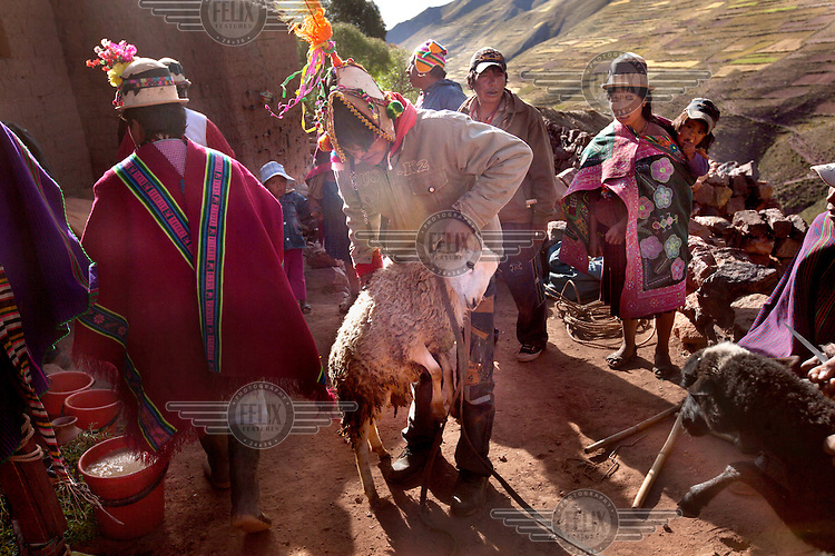 A sheep is brought for slaughter in honor of Santa Cruz, or the Holy Cross, during a ceremony in the tiny community of Villa Ventilla, near Macha. <br /> <br /> The people of Macha and surrounding communities carry on the pre-Columbian tradition of ritual fighting. The communities gather on the plaza of Macha to fight and dance in competition with each other. The blood that is spilled is an offering to Mother Earth. In return, the people ask for rain and a good harvest. This ritual is called tinku or fiesta de la cruz since the cross is also engaged in the festivities. The cross is dressed up, given offerings and brought from communities around Macha to the church in town. This syncretic festival melds pagan, pre-christian rituals with Catholic practice. /Felix Features