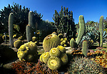 Cactus Garden at Huntington Gardens, Pasadena, CA