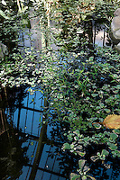 Tropical Rainforest Glasshouse (formerly Le Jardin d'Hiver or Winter Gardens), 1936, René Berger, Jardin des Plantes, Museum National d'Histoire Naturelle, Paris, France. View from above of the Art Deco style glass and metal roof  reflected by the morning light in the great pool on which leaves and water plants are floating.