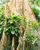 Brazil, Belem, South America, portrait of a man standing in a sumauma tree in the Amazon Rainforest