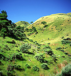 Steep grassy hills of farming land, Kapiti, near Wellington, North Island, New Zealand