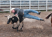Yfat Yossifor | Mlive.com<br /> Cody Mousseau wrestles a steer Monday, Aug. 5, at the Bay County Fairgrounds, 800 Livingston in Bay City. The rodeo was a prelude to the Bay County Fair which runs Tuesday to Saturday, Aug. 6 - 10.