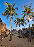 Virgin Gorda, British Virgin Islands, Caribbean<br /> Plam trees on the beach among the granite boulders at The Crawl National Park