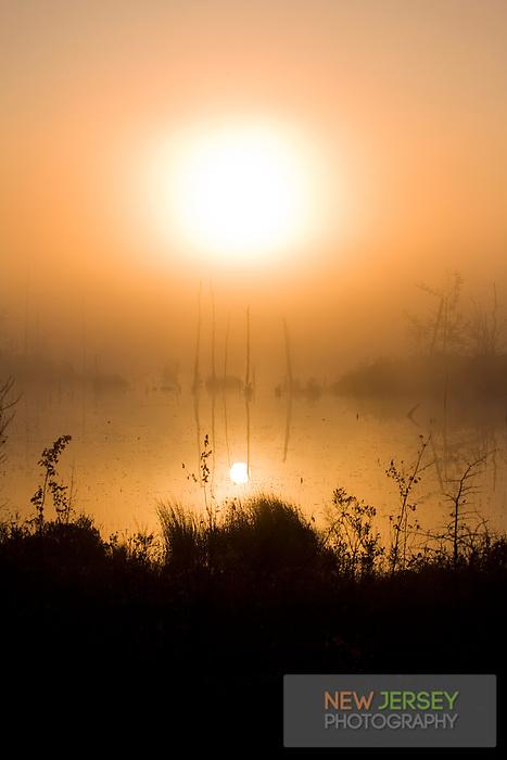 Pinelands marsh, Pinebarrens, New Jersey