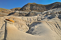 Hoodoos in Badlands near Drumheller<br /> East Coulee near Drumheller<br /> Alberta<br /> Canada