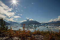 Fall landscape of Willows and Colony Glacier with Chugach Mountains and ice bergs in Inner Lake George.  Southcentral, Alaska<br /> <br /> Photo by Jeff Schultz/SchultzPhoto.com  (C) 2018  ALL RIGHTS RESERVED<br /> <br /> 2018 Bears, Glaciers and Fall Colors Photo tour/workshop