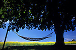 Hammock tied between two trees in the afternoon with sunny blue skies and shade with yellow flowers in the background, La Conner, Washington State Skagit County USA..