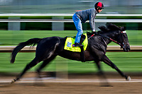 LOUISVILLE, KENTUCKY - MAY 01: Sonneteer, owned by Calumet Farm and trained by Keith Desormeaux, exercises in preparation for the Kentucky Derby during Kentucky Derby and Oaks preparations at Churchill Downs on May 1, 2017 in Louisville, Kentucky. (Photo by Scott Serio/Eclipse Sportswire/Getty Images)