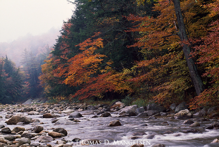 Leaves changing colors along a stream in New Hampshire.