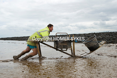 The Last Mudhorse Fishermen. UK 2008. The Sellick family, Stolford, Bridgewater Bay, Somerset. Adrian returning from th fishing nets.