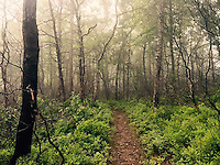 Courtesy photo/KRISTEN LEWIS<br /> The trail bisects a foggy forest.