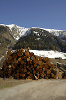 Wood pile outside cattle shed, between Brig and Oberwald Swiss alps, Switzerland,