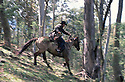 Mountain Cattleman racing downhill after horse. Snowy Mountains, Victoria
