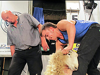BNPS.co.uk (01202 558833)<br /> Pic: Graham Hunt/BNPS<br /> <br /> Henry Mayo becames the first English winner at the New Zealand Shearing Championships since 1991.<br /> <br /> (Collect pic) Henry Mayo sheering a sheep in New Zealand.