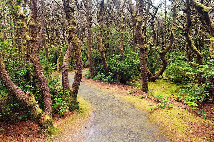Trail through coastal forest, Oregon Coast, Oregon, USA, North America