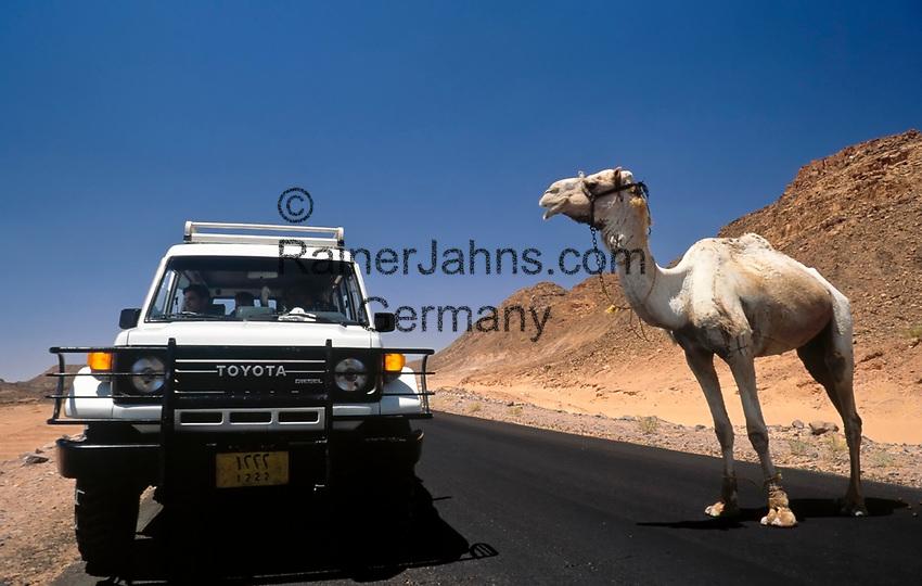 EGY, Aegypten, Sinai: Jeep und Dromedar   EGY, Egypt,  Sinai: Jeep and Dromedary