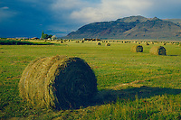 Rolled hay in Warner Valley<br />