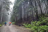 CANADA, Vancouver, British Columbia, mountain bikers Andrew Baker and Jordi Morros walk their bikes through the rainforest in the fog, North Vancouver