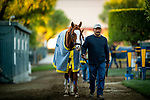 OCT 26: Breeders' Cup Dirt Mile entrant Improbable, trained by Bob Baffert, cools out at Santa Anita Park in Arcadia, California on Oct 26, 2019. Evers/Eclipse Sportswire/Breeders' Cup