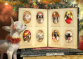 CHIARA,CHRISTMAS ANIMALS, WEIHNACHTEN TIERE, NAVIDAD ANIMALES, paintings+++++,USLGCHI486,#XA# ,funny ,funny