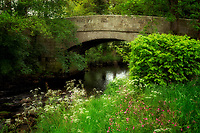 Bridge over road, Teign River, and wildflowers in Dartmoor National Park, England.