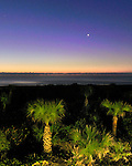 Palm Trees Lit by the North Star - Before Dawn at Cocoa Beach, Florida