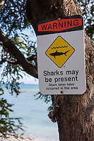 A shark warning sign at a beach in Olowalu, Maui.