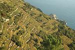Village de Manarola et vignobles classes par le patrimoine de l Unesco depuis le sentier reliant Corniglia et Manarola. Parc national des Cinque Terre. Ligurie. Italie