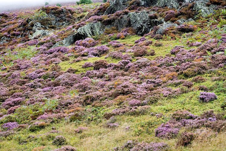 Vegetation near Hoinster Pass, Lake District, England