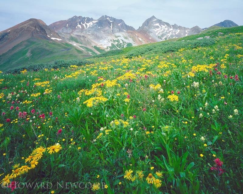 High alpine meadow of wildflowers below the Wilson Massif, near Telluride, Colorado.