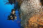 Diver & Silversides, Grand Cayman