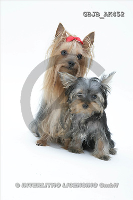 Kim, ANIMALS, fondless, photos(GBJBAK452,#A#) Tiere ohne Fond, animales sind fondo