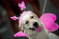 A Labrador Retriever dog, wearing a fancy costume, participates in the Blocao pet carnival show at Copacabana beach in Rio de Janeiro, Brazil, 12 February 2012.