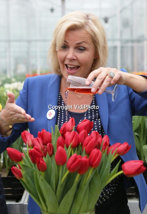 Foto: VidiPhoto<br /> <br /> LISSE &ndash; Het Nederlandse Rode Kruis werd donderdag verrast met een bijzonder eerbetoon. De hulpverleningsorganisatie kreeg een eigen tulp aangeboden van kwekersvereniging Remarkable Tulips uit Lisse. Ambassadrice Irene Moors van het Nederlandse Rode Kruis mocht de tulp officeel van de naam Red Heart voorzien. &ldquo;Een mooie tulp met een prachtige naam&rdquo;, aldus Moors. &ldquo;Want Red Heart staat symbool voor het rode hart dat klopt bij alle vrijwilligers van het Rode Kruis om mensen in nood te helpen.  De doop van de tulp Red Heart is aan de vooravond van Nationale Tulpendag op de Dam in Amsterdam zaterdag. Voor het vierde achtereenvolgende jaar wordt een enorme pluktuin met 200.000 tulpen ingericht. Vanaf 13.00 uur mag het publiek dan een gratis bosje tulpen plukken.