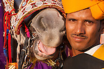 Horseman with his costumed horse, Jaipur, India