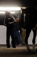 HALLANDALE, FL - JANUARY 27: California Chrome exercise rider Dihigi Gladney, after riding California Chrome for his last training session before a race, at Gulfstream Park Race Course on January 27, 2017 in Hallandale Beach, Florida. (Photo by Douglas DeFelice/Eclipse Sportswire/Getty Images)