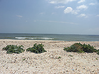 SEA_LOCATION_80370